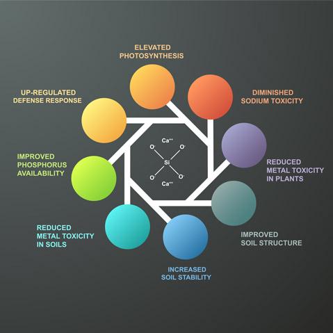 Converge Infographic